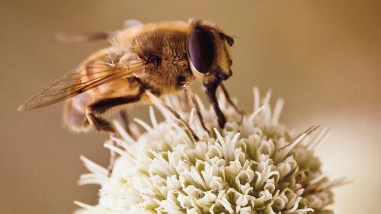 Liste invasiver Tier- und Pflanzenarten
